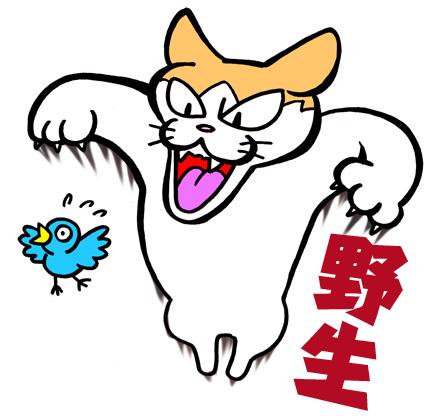 猫/アネゴ05